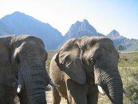 Fairy Glen elephants