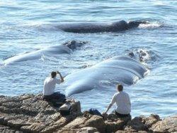 Whale watching Hermanus